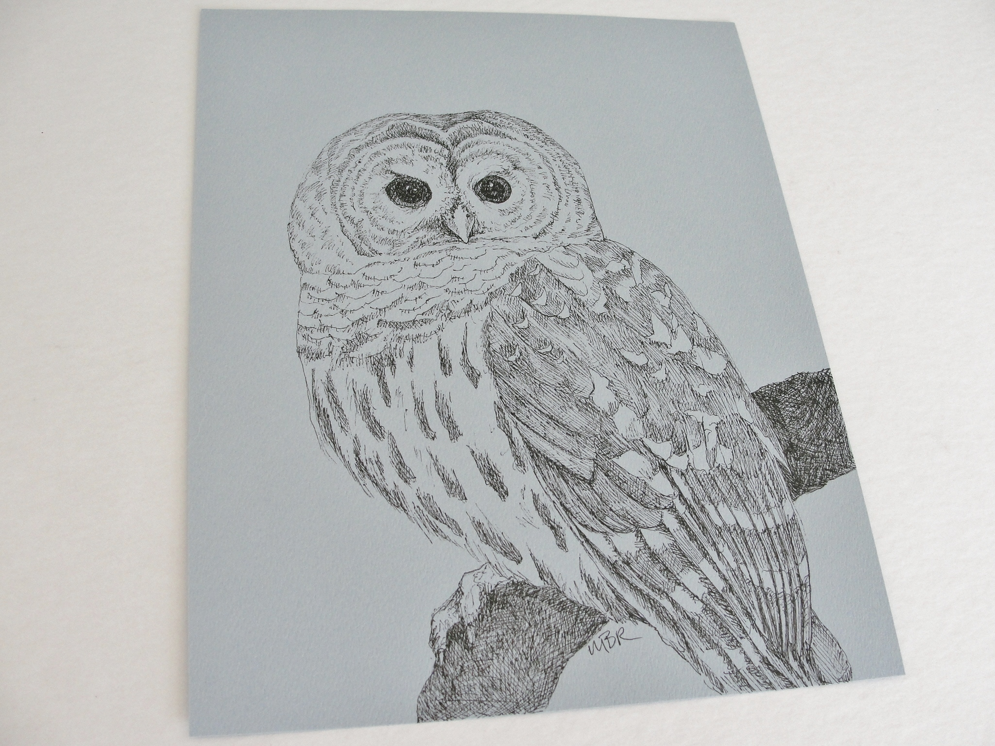 It's just an image of Decisive Barred Owl Drawing